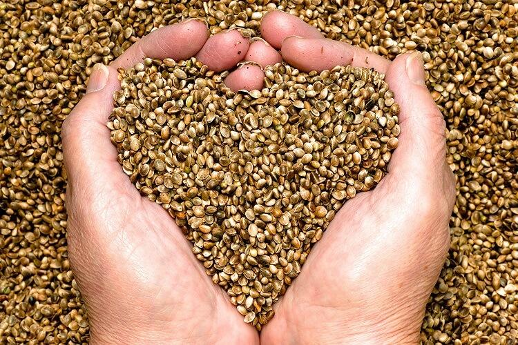 woman holding hemp seeds in hands