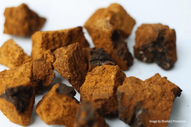 pieces of chaga mushrooms