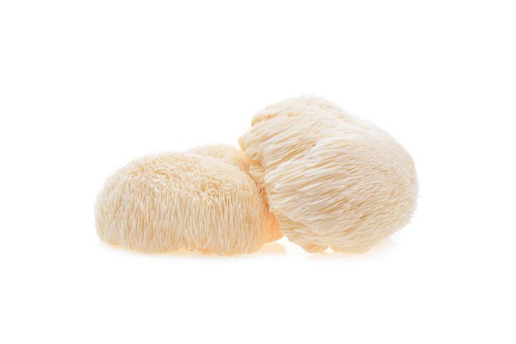 lion's mane mushrooms on white background