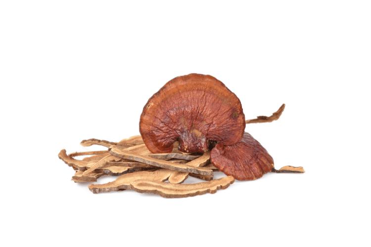 reishi mushrooms on white background